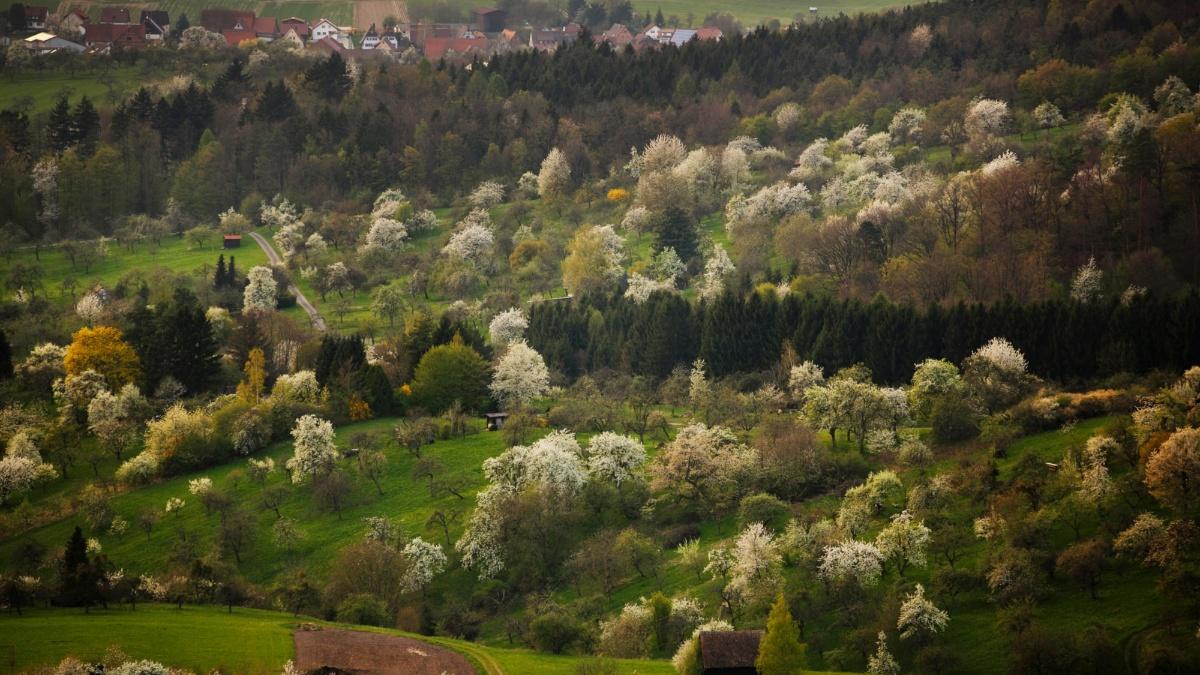 Streuobstwiesen bei Auenwald im Rems-Murr Kreis